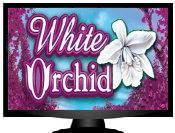 white orchid Pokies Slots